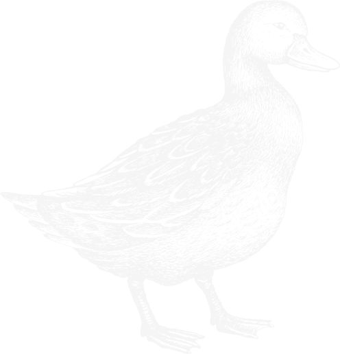 blue drawing of duck
